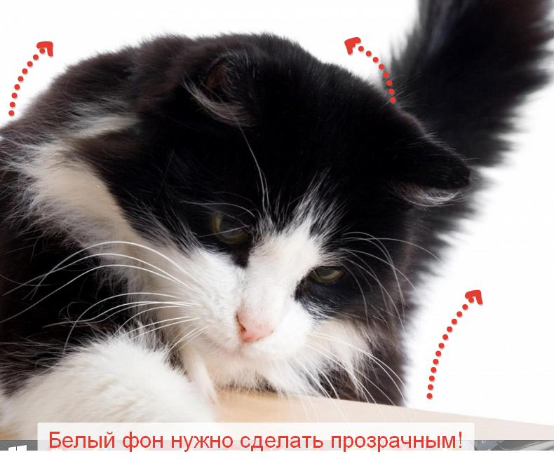 Скриншоты от Яндекс диска   это великолепно!